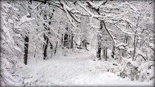 Frosty Footpath - winter snow