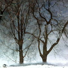 Dagens foto - 109: The Ice Is Getting Thinner (petertandlund) Tags: longexposure trees snow color reflection ice water silhouette reflections square sweden stockholm dream dreamy 365 sthlm 08 slowshutterspeed sundbyberg 109365