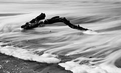 Beach Log (Alene Davis) Tags: ocean longexposure beach water blackwhite log waves branch shore seafoam