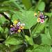 Piccoli fiorellini