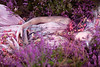 "Wonderland ""Gammelyn's Daughter, a Waking Dream"" (Kirsty Mitchell) Tags: pink fairytale heather fantasy wonderland enchanted ophelia galleon kirstymitchell wonderlandpartii gammelynsdaughter"