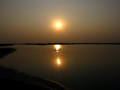 Little Rann of Kutch (Shreeram Ghaisas) Tags: birds kutch dasada rann littlerann gujarath