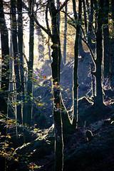 - (Mr.Groka (Gorka Valencia)) Tags: tree arbol rboles arboles bosque rbol silueta navarra belate puertodebelate