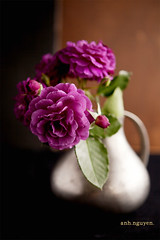 Still-life with purple roses (anhsphoto_busy!!) Tags: roses stilllife still purplerose