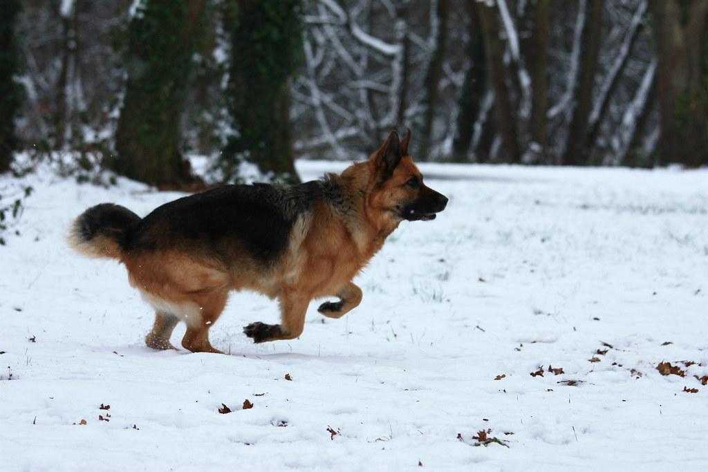 Première neige 2012 (front focus)