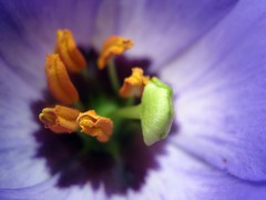 colors (SS) Tags: blue light shadow italy orange white flower macro nature beautiful yellow composition contrast canon garden photography focus colorful soft mood shadows view purple angle bokeh pov perspective powershot september framing minimalism tone lazio celeste natureselegantshots a480 fleursetpaysages