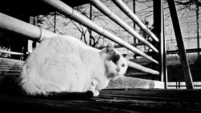 Today's Cat@2012-02-07