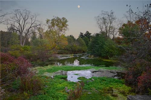 Trail Spring Duck Pond 10-22-2011 0072