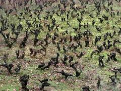 Beaujolais, Pays des Pierres Dores, Vins, Beaujolais Nouveau, Bagnols, Bois-dOingt, Chamelet, Chatillon-sur-Azergue, Chessy,-les-mines, Frontenas, Jarnioux, Lgny, Ltra, Oingt, Saint-Laurent-d'Oingt, Sainte-Paule, Saint-Vrand, Ternand, Theiz, Azergue (tamycoladelyves) Tags: cute nature wonderful happy amazing nice fantastic lumire couleurs priceless awesome great happiness super games stunning excellent belle beaujolais extraordinaire lovely charming bedandbreakfast enfant sourire pays bonheur plaisir beau magnifique insolite beautifull tourisme rire delightful expos ballades bello 2014 trange heureux pleinair enfance 2015 superbe happylife oustanding joiedevivre expositions actualits randonnes sorties promenades amusant ravissant actu surprenant gentillesse pierresdores bonnehumeur chambredhte