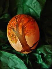 DSCN8809 (therovingeye) Tags: easter eggs eggshells paintedeggs