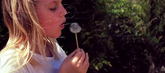 wishes... (Rebekah Joy Taussig) Tags: plant flower nature hair spring weed wind blow dandelion seeds blonde wish