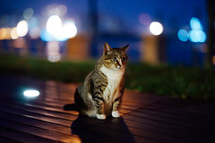 (I) (Tridentz | ) Tags: light night cat hongkong gm bokeh f14 sony 85mm neko fe  85    gmaster  kittysuperstar