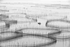 Bamboo pods in black and white (Ben-ah) Tags: china net fisherman bamboo fujian pods xiapu