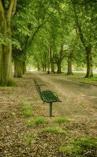 Stroll Through The Park.