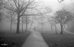 Her ghost in the fog (Brian Copeland Photography) Tags: road park ca street blackandwhite bw cloud white mist ontario canada film monochrome weather misty fog clouds 35mm blackwhite exterior outdoor air hamilton foggy ilfordhp5 135 fullframe ilford moisture moist selfdeveloped blackandwhitefilm ilfotecddx ilfordfilm roll229