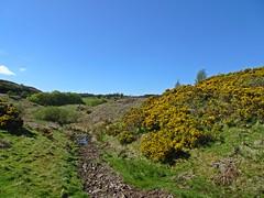 The Bone-Dry River Bed (Bricheno) Tags: scotland escocia szkocja schottland scozia renfrewshire cosse howwood whittliemuir  esccia   bricheno scoia