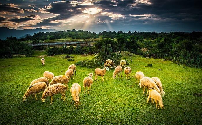 Đồng cừu