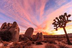 A spectacular desert sunset, California | Photography by David Curry (manbeachrm) Tags: sunset sunsets sunsetbeach sunsetpark sunrisesunset beachsunset sunsetting sunsetblvd sunsetsky sunsetstrip beautifulsunset amazingsunset sunsetcolors sunsetview floridasunset sunsetporn californiasunset sunsetphotography chasingsunsets scenicsunset sunsetphotographs sunsetlovers sunsetlover sunsethunter sunsetoftheday sunsetmadness instasunsets sunsetsniper instasunset igsunset piclogy
