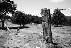 Barbed Wire (Kent Holloway) Tags: au australia tasmania goldenvalley leicam6 fujiacros100 summicron35mm