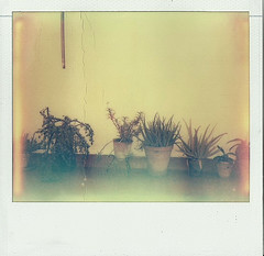 Plantas Tétricas