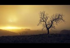 The fog... (Stuart Stevenson) Tags: uk mist tree fog landscape scotland glow silent hill fox baretree fright undulating earlywinter clydevalley difusedlight lateautumn southlanarkshire thanksforviewing transientlight