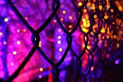 Magic land is just behind the fence... (Anna Mizi) Tags: pink colors fence lights dof shine purple bokeh magic sparkling illuminating magiclights