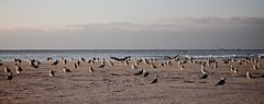 (_counterclockwise_) Tags: mar mare places galicia louro praias oceano atlantico spiagge galizia maredinverno areiamaior