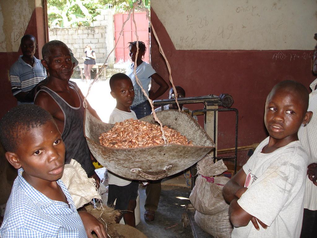 Coopérative cacaoyère du Nord