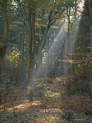(yvonnepay615) Tags: uk autumn trees nature woodland lumix norfolk panasonic g1 sunrays 45mm eastanglia autofocus lynford platinumheartaward natureselegantshots esenciadelanaturaleza