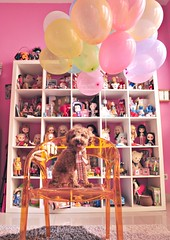 "happy christmas ""birthday"" to meeee (girl enchanted) Tags: red dog love ikea vintage balloons puppy festive toy toys doll dolls heart toystory bears balloon books disney shelf collection celebration poodle kenner blythe doggy barbies smurf celebrate pinocchio collect collectibles steiff dollies toypoodle toyroom expedit poodlepuppy dollroom kenners oneyearsold redpoodle"