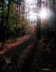 Morning Dreams (Cna1_10) Tags: morning shadow sky sun tree forest woods