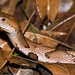 Copperhead Crossing Road