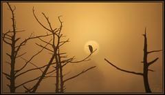 Close-up (WanaM3) Tags: park sun nature fog sunrise texas canoe bayou pasadena egret bayareapark armandbayou wanam3
