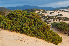 "Dunes • <a style=""font-size:0.8em;"" href=""http://www.flickr.com/photos/55747300@N00/6649058435/"" target=""_blank"">View on Flickr</a>"