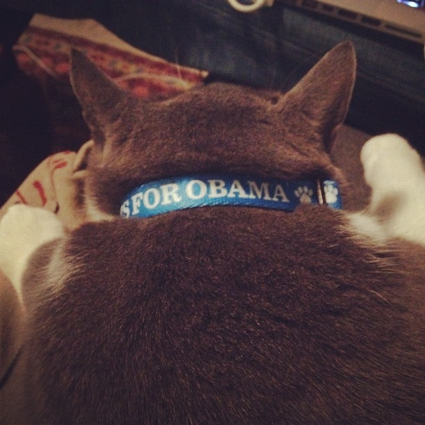 Diego is ready for the REPUBLICAN DEBATEs #catsforobama