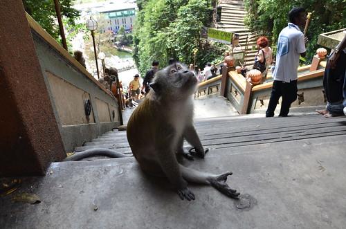 Monkey Business 2 ©  Still ePsiLoN