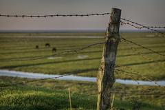 Wired (g_heyde) Tags: horses fence post barbwire dike elbe stacheldraht m9 deich niedersachsen elbdeich fencingpost altenbruch hadeln