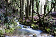 Otra del rio da Fraga (Perurena) Tags: trees rio river arboles camino sony marin galicia bosque senderismo pontevedra vereda sendero senda fraga corriente efectoseda alpha700 riodafraga
