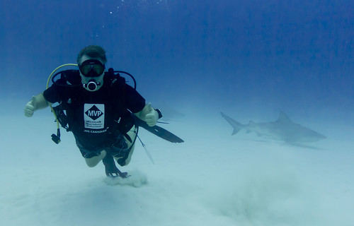 Swimming with the sharks - literally