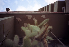 (patrickjoust) Tags: street city cactus urban plant color building film analog america 35mm lens uruguay high focus kodak south patrick rangefinder olympus 100uc highrise manual montevideo xa rise expired joust range finder zuiko f28 compact c41 ultracolor autaut patrickjoust