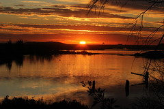 Golden Sunset (BCER*) (Jane Elizabeth Lazarz) Tags: sunset orange beach silhouette clouds reflections gold pacific silhouettes sunsets pacificocean wetlands goldensunset sunsetreflection huntingtonbeach tidalpool waterreflection bolsachica firesunset bolsachicawetlands yelloworangered huntingtonbeachca sunsetoverwater goldensunsets eos60d spectaucularsunsets