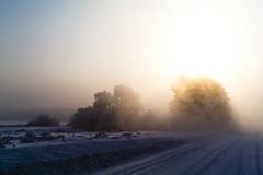 (av_shatlov) Tags: trees winter sun frost frog 1855mm scape nx10
