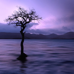 Millarochy Tree (Christopher Swan) Tags: longexposure winter tree water clouds scotland nationalpark highland lochlomond millarochybay christopherswan wwwchristopherswanphotographycom