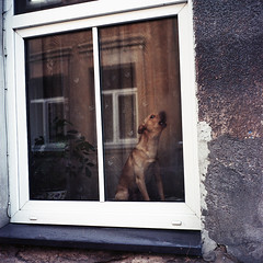 dog color 6x6 film lithuania vilnius yashica124g