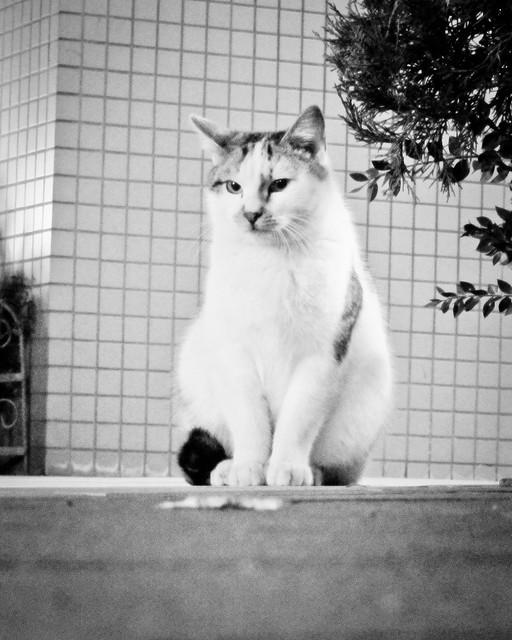 Today's Cat@2012-01-25