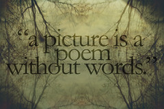25 (Alyssa Jiosa) Tags: abstract reflection tree art nature poem quote branches picture vignette
