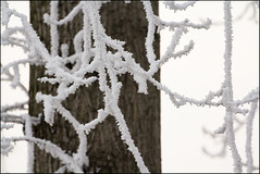 Galaverna - Hoarfrost (beppeverge) Tags: winter cold ice gelo hoarfrost © rime inverno freddo hoar galaverna ghiacco beppeverge