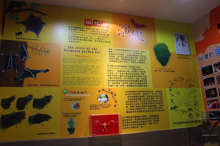 雲林水林黃金蝙蝠生態館(誠正國小)0007
