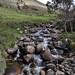 Grazioso ruscello a 3900m verso Andahuaylas