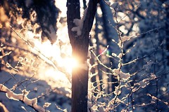 Winter Sunlight (Eric Lindqvist) Tags: winter sunlight snow tree canon 50mm vinter sunny flare f18 ef sickla canonef50mmf18ii sno 1000d